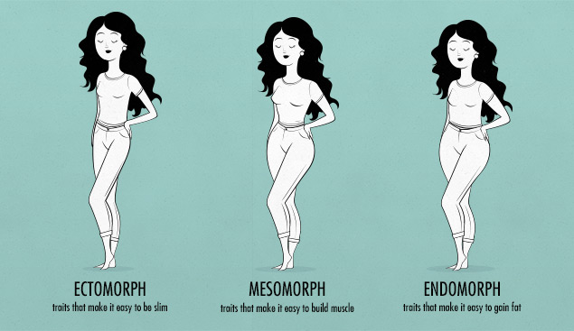 female body shapes & somatotypes—female ectomorph, endomorph, mesomorph